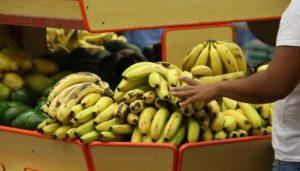 Rolim e Costa Marques têm a banana maçã mais barata de Rondônia