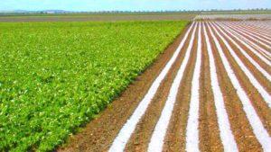 PRODUÇÃO AGRÍCOLA: FAO aumenta lista de países em situação de insegurança alimentar