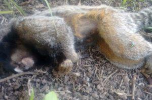 Dois macacos são confirmados com febre amarela em Pimenta Bueno