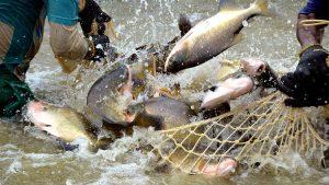 Empresas de piscicultura da Noruega avaliam investimentos no Brasil