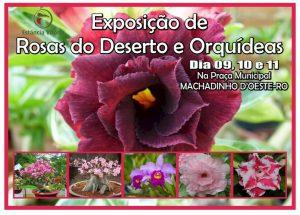 Machadinho: Venha conferir a exposição de Rosas do Deserto e Orquídeas, dias 09, 10 e 11 de agosto, na praça municipal
