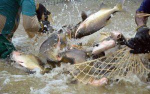 Peixe de Rondônia vai receber Protocolo e georreferenciamento
