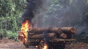 Governo não vai mais queimar maquinário apreendido em unidades de conservação e destinará tudo ao DER