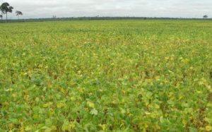 Ministra da Agricultura lançará oficialmente o plantio da safra de soja em Rondônia