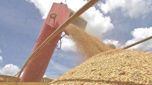 Medidas de governos contra coronavírus melhoram situação de setores do agronegócio