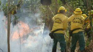 Ibama lança editais de contratação de brigadistas para Machadinho D'Oeste, Porto Velho e Nova Mamoré