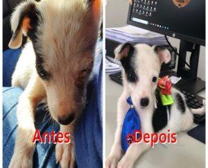 80 cachorros que viviam em situação de maus-tratos são resgatados na capital