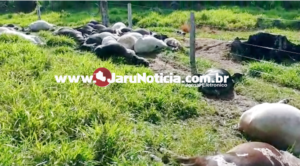 Vídeo – Pecuarista perde 34 cabeças de gado atingidas por raio em Cacaulândia/RO