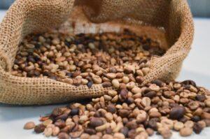 Produtividade do café em Rondônia tem salto de 400%
