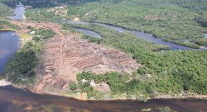 Juíza manda devolver madeira que PF confiscou no Amazonas