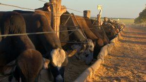 Cotação do boi gordo: preço médio da arroba chega a R$ 292,33 em Rondônia