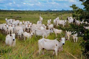 Parceria vai incentivar melhoria genética para o rebanho bovino de Rondônia